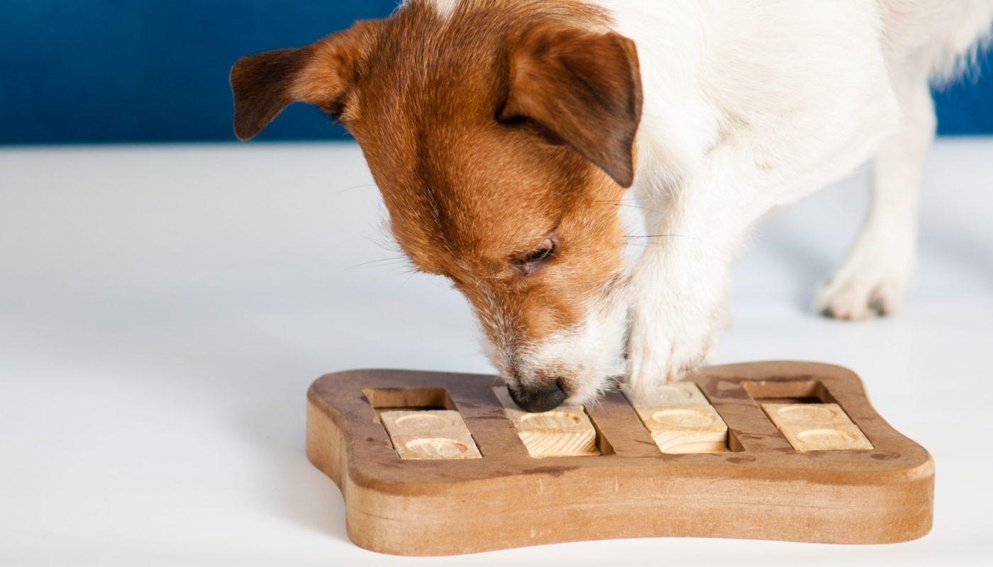Rodzaje zabawek dla psów
